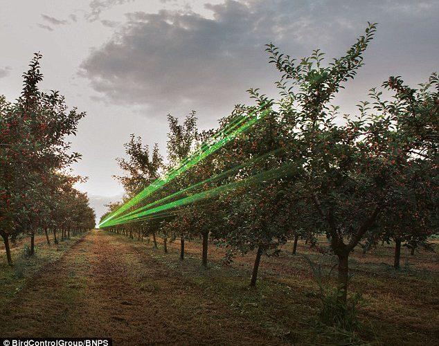 Zoznámte sa s robocrow: Stroje, ktoré vystreľujú laserové lúče s dlhým dosahom na vydesenie vtákov, nahrádzajú strašiaky