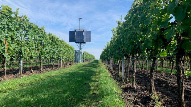 Laserom proti škorcom! Na Morave chráni vinice nová technológia